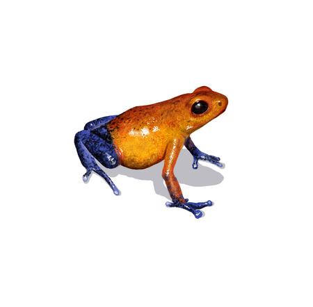 rana venenosa: Ilustración digital de una rana dardo Foto de archivo