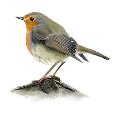 red breast: Digital illustration of a robin Stock Photo