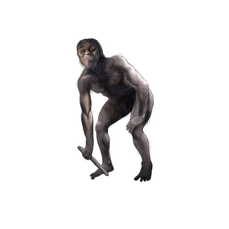 australopithecus: digital illustration of a australopithecus