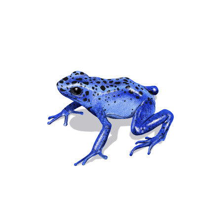 Digital illustration of a dart frog