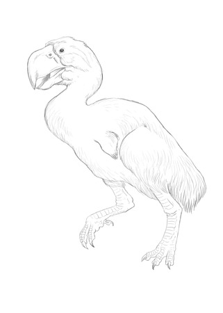 giant: Gastornis illustration, ancient giant bird