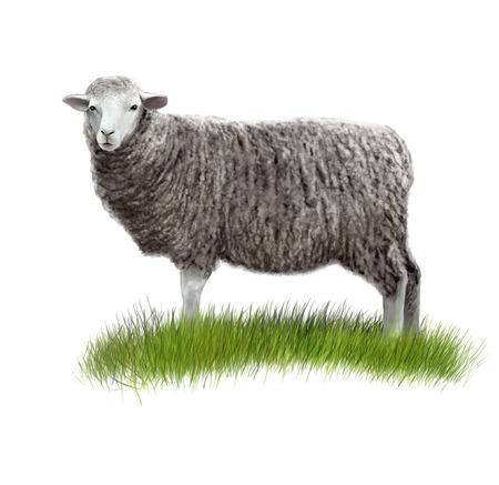 Digital illustration of a sheep