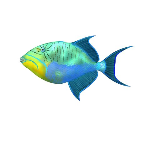 balistoides conspicillum: Digital illustration of a triggerfish