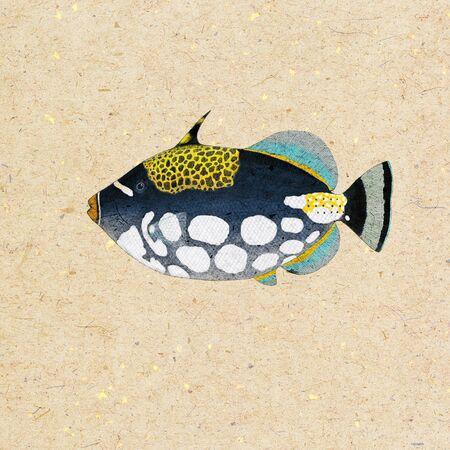 Digital illustration of a triggerfish illustration