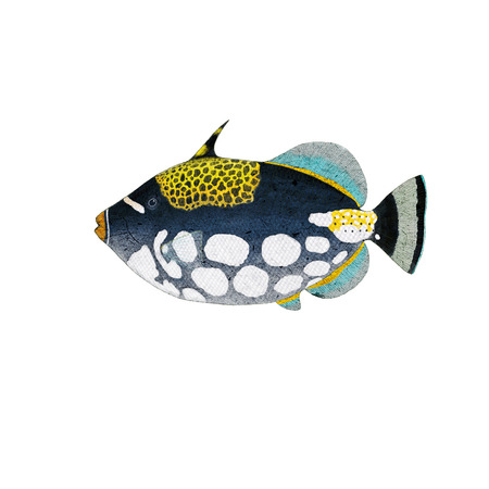 clown fish: Digital illustration of a triggerfish