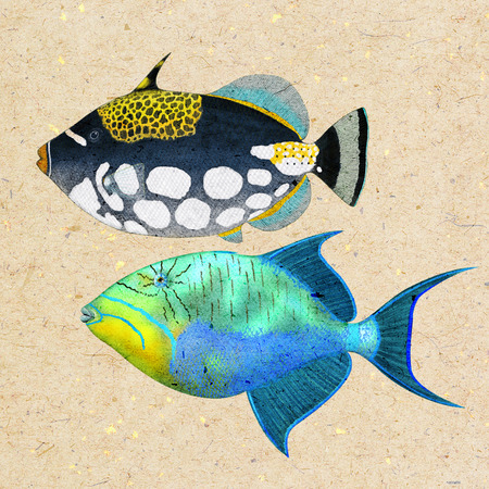 clown triggerfish: Digital illustration of a triggerfish