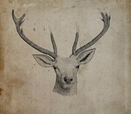 black deer: Digital ink illustration of a deer head