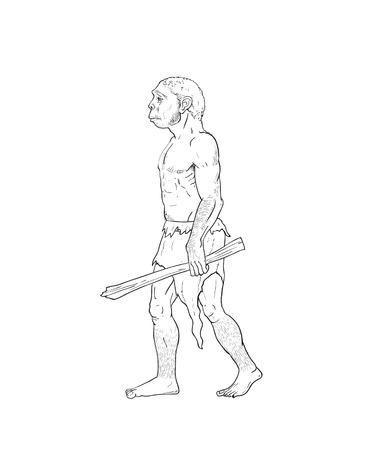 homo: Human evolution digital  illustration, homo erectus, australopithecus, homo habilis, neanderthal, cromagnon