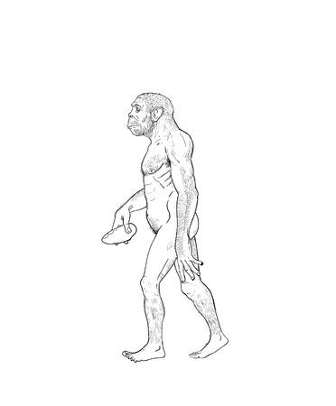 erectus: Human evolution digital  illustration, homo erectus, australopithecus, homo habilis, neanderthal, cromagnon