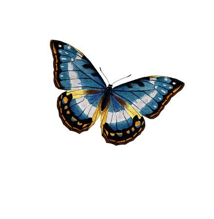 papillon dessin: Illustration numérique d'un papillon