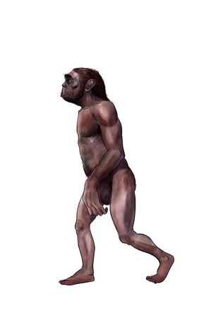 erectus: Australopithecus digital  illustration, prehistoric lucy