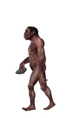 Homo habilis digital illustration, inked