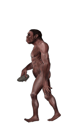 Homo habilis digital illustration, inked