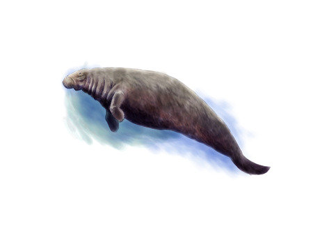 Digital illustration of the extinct Steller
