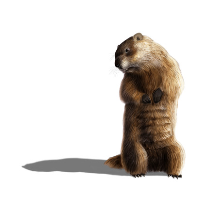 Digital illustration of a groundhog looking at his shadow 版權商用圖片