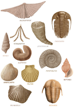 petrified fossil: Digital illustration of a bunch of marine fossils