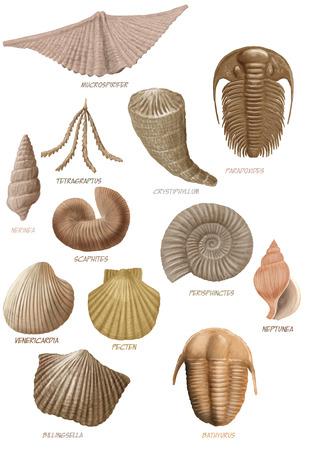 fossils: Digital illustration of a bunch of marine fossils