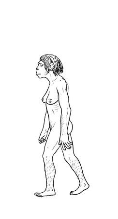 homo sapiens: Human evolution digital  illustration, homo erectus, australopithecus,sapiens