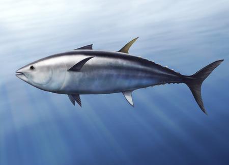 thunnus: digital illustration of a tuna, Thunnus thynnus