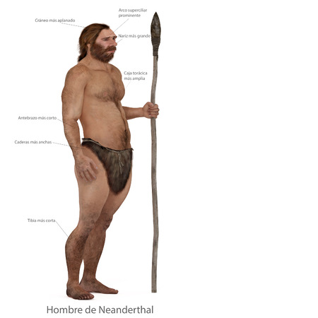 sapiens: Digital illustration and render of a Neanderthal man