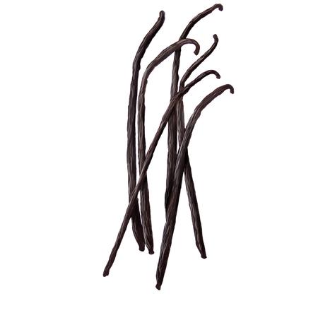 digital illustration of some vanilla sticks