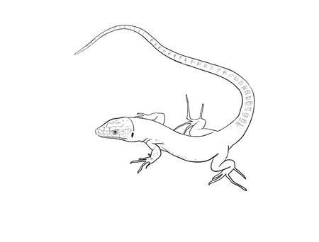 lacerta: Lizard digital illustration, long tail Stock Photo