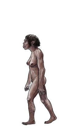 australopithecus: Human evolution digital  illustration, homo erectus, australopithecus,sapiens