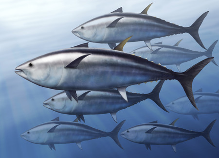 fishing industry: digital illustration of a tuna, Thunnus thynnus