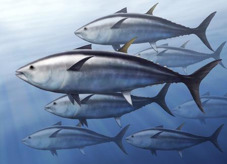 Ilustración digital de un atún, Thunnus thynnus