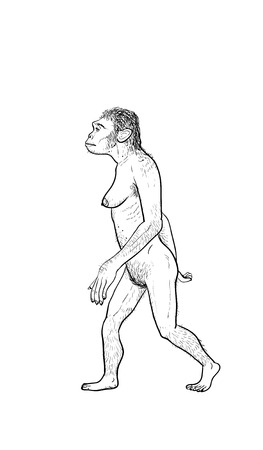 human evolution: Human evolution digital  illustration, homo erectus, australopithecus,sapiens