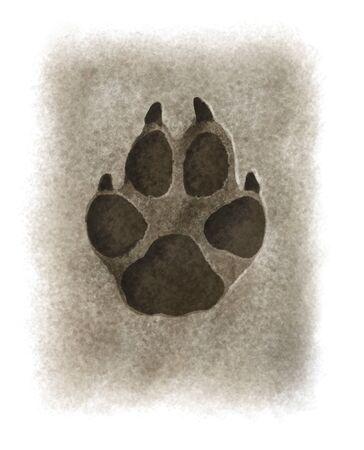 mud print: Digital illustration of a wolf footprint