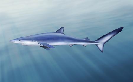 dangerous reef: Digital illustration of a blue shark