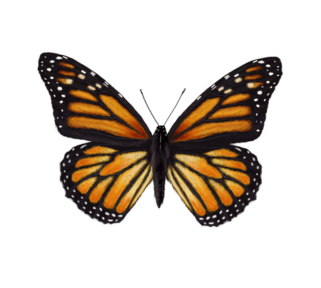 모나 크 나비의 디지털 그림