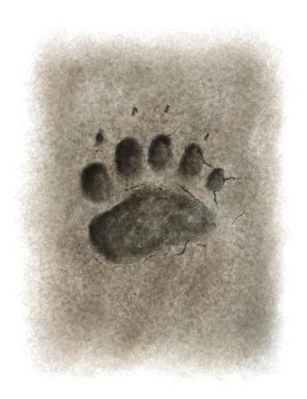 paws: Digital illustration of a bear footprint Stock Photo