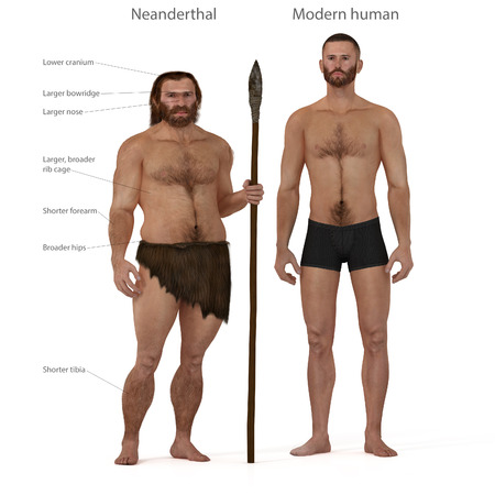 neanderthal man: Digital illustration and render of a Neanderthal man