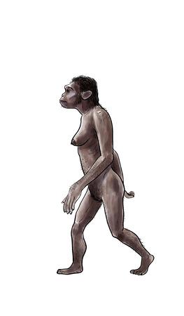 Menselijke evolutie digitale illustratie, homo erectus, Australopithecus, sapiens Stockfoto