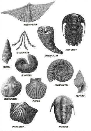 Digital illustration of a bunch of marine fossils