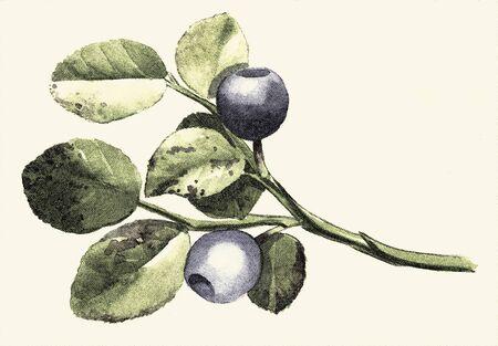 background paper: Botanical digital engraved illustration Stock Photo
