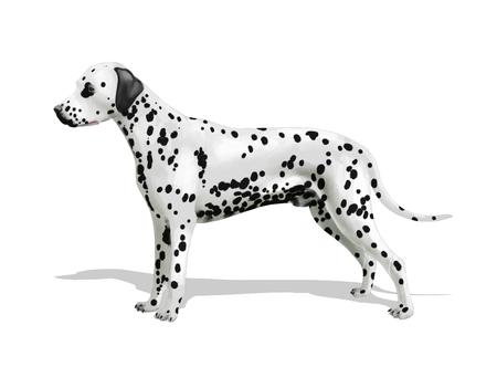 Digital illustration of a dalmatian dog