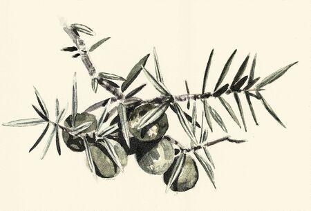 Botanical digital engraved illustration 版權商用圖片