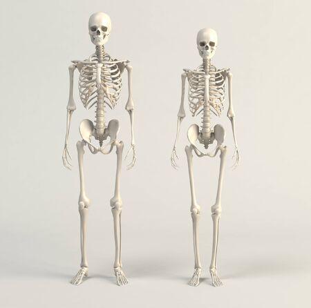 3d render of skeleton