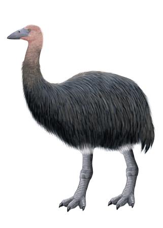 Digital illustration of an elephant bird, aepyornis