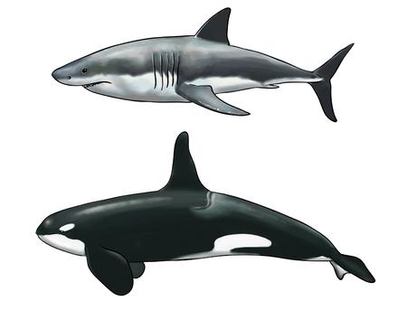 Digitale waterverf van een orka vergelijking met een witte haai Stockfoto