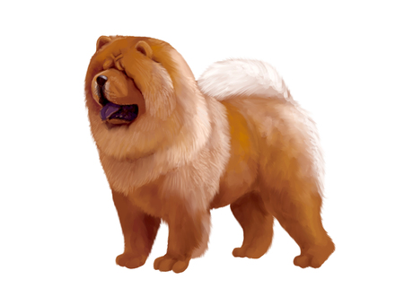 Digital illustration of a chow-chow