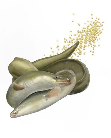eel couple copulating digital illustration Stok Fotoğraf