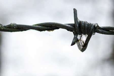 barbed wire fence: Barbed wire fence with melting snow