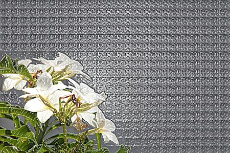 Bacground White Flowers