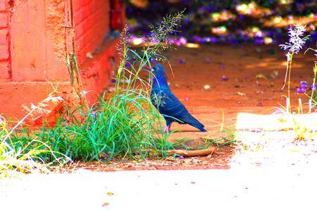 framed: Bird framed - artistic landscape
