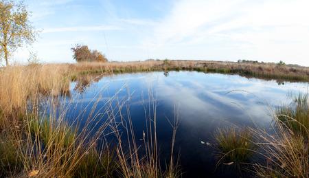 black moor: bog nature landscape water tree