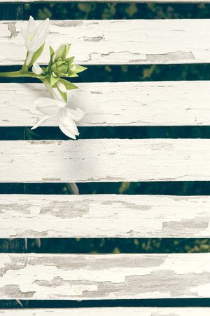 Garden Lily Over White Wooden Fence Background photo